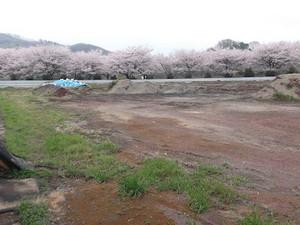Kiryu5_sakura