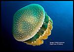 Jellyfishtextsize