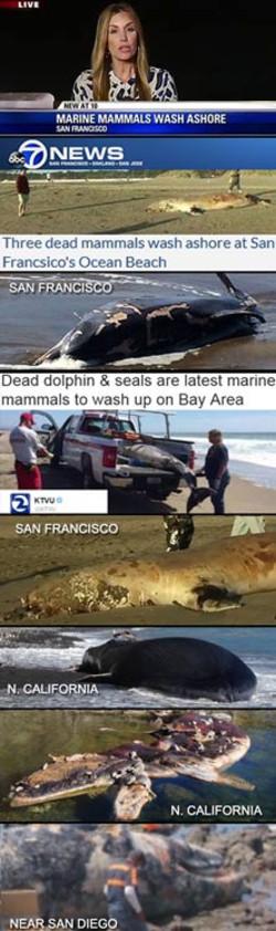 Ca_dead_mammals